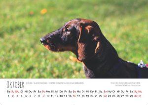 Dackelliebe Dackel Kalender